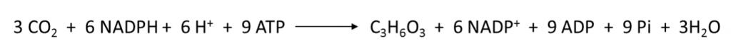 Fotossíntese: equação geral da etapa bioquímica