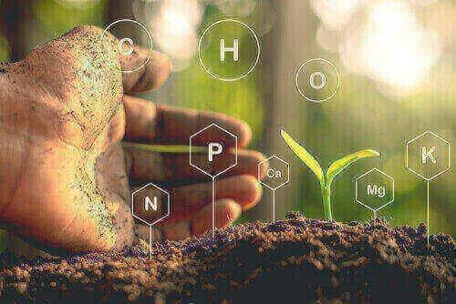ciclo do nitrogenio