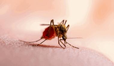 malária e o ciclo de vida do plasmodium