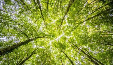 Biomas brasileiros: quais são e características