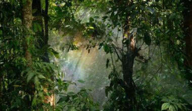 Botânica no Enem: características, temas e como pode cair na prova